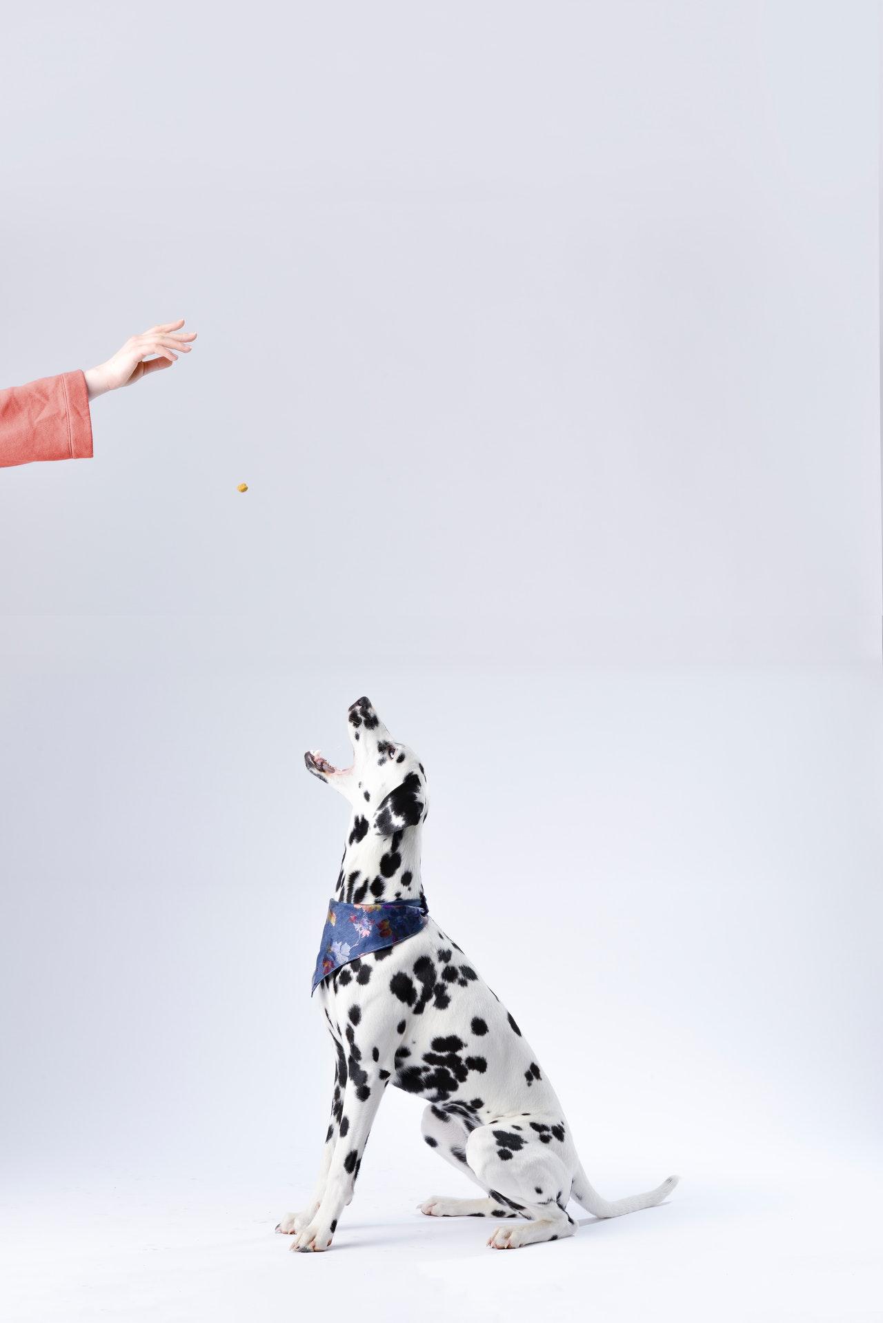 Zaopatrz swojego psa w pełni, stawiając na zestawy psich akcesoriów