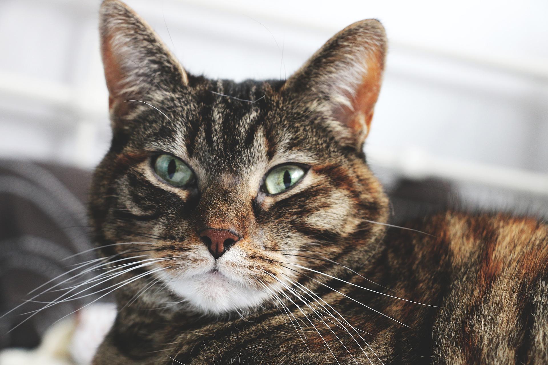 Jak prawidłowo karmić kota?