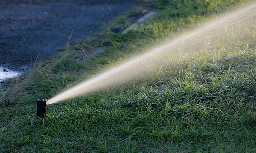 Jaką pompę wody do ogrodu wybrać?